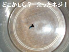P6170128.jpg